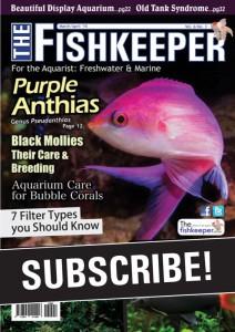 thefishkeepersubscribe