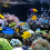 Buying a Marine Aquarium