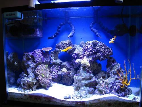 Buying a marine aquarium the fishkeeper for Starting a saltwater fish tank