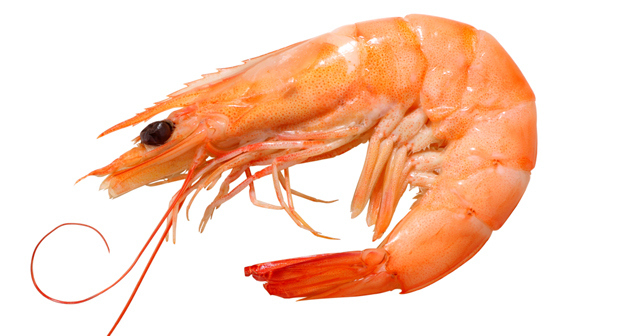 Live foods can be found in all shapes and sizes, from tiny daphnia to large shrimps and worms, and should be chosen according to the size of your fish.