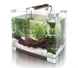 We quite like this 15L Aquarium Fish Small GlassTank Fresh Water With LED Light N Filter Black (15L) but there are many others on the market, some more expensive and some cheaper.