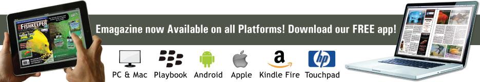 app-banner1